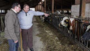 Ronny Wähner besichtigt den Kuhstall von Heinz Kaden in Schlettau.